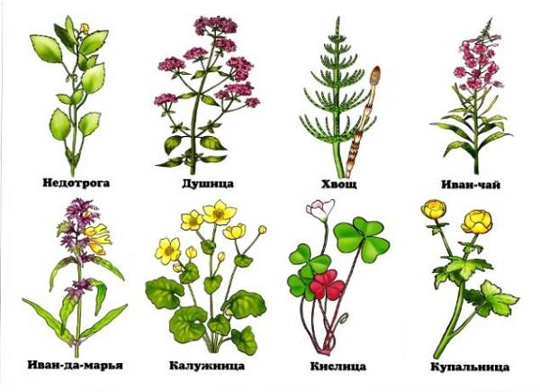названия лесных цветов