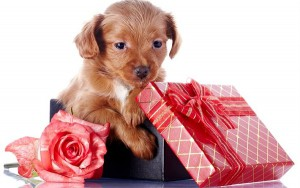 домашнее животное в подарок
